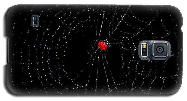 Bulls-eye Galaxy S5 Case