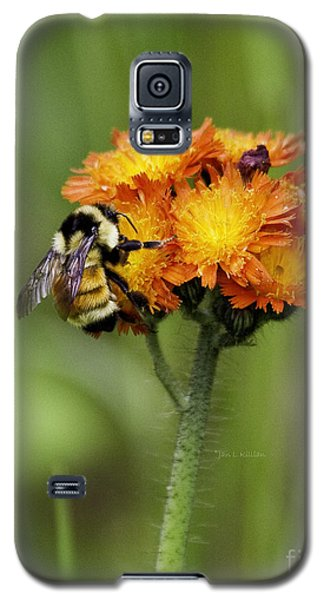 Bumble And Hawk Galaxy S5 Case