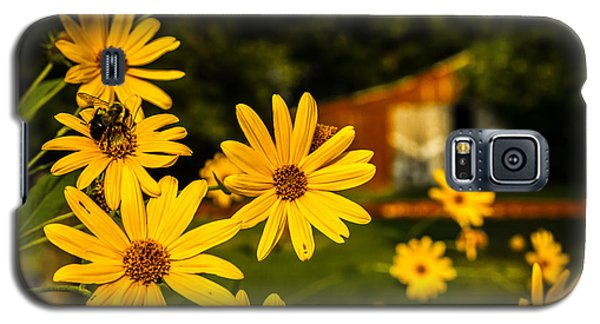 Bumble Bee On A Western Sunflower Galaxy S5 Case