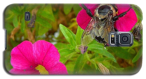 Bumblebee Hug Galaxy S5 Case by Heidi Manly