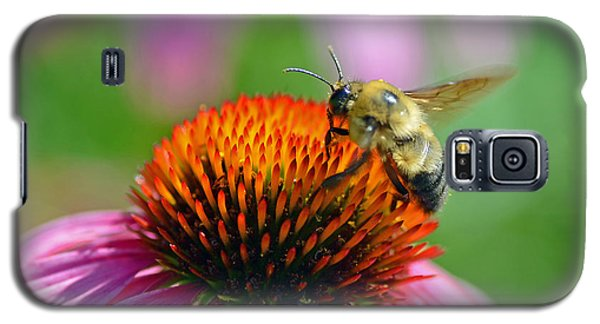 Galaxy S5 Case featuring the photograph Bumblebee On A Coneflower by Rodney Campbell