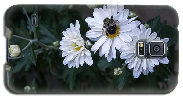 Bumblebee On Daisy Galaxy S5 Case