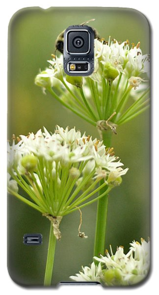 Galaxy S5 Case featuring the photograph Bumblebee On Garlic Chives by Rebecca Sherman