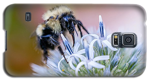 Bumblebee On Thistle Blossom Galaxy S5 Case by Marty Saccone