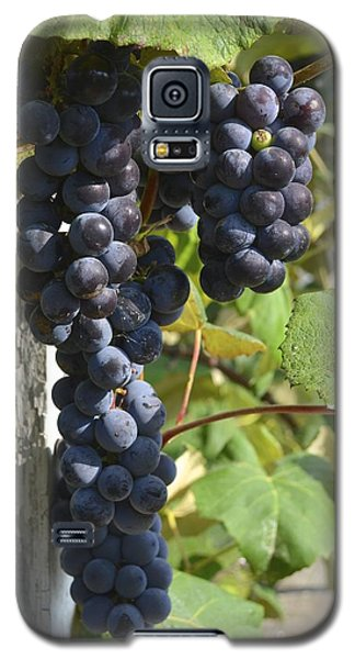 Bunches Of Grapes Galaxy S5 Case