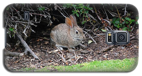 Galaxy S5 Case featuring the photograph Bunny In Bush by Debra Thompson