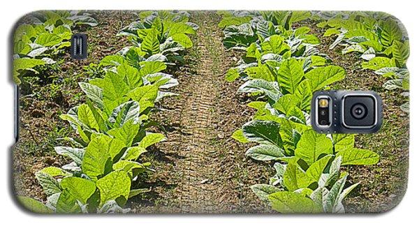 Burley Tobacco Galaxy S5 Case