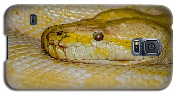 Burmese Python Galaxy S5 Case by Ernie Echols