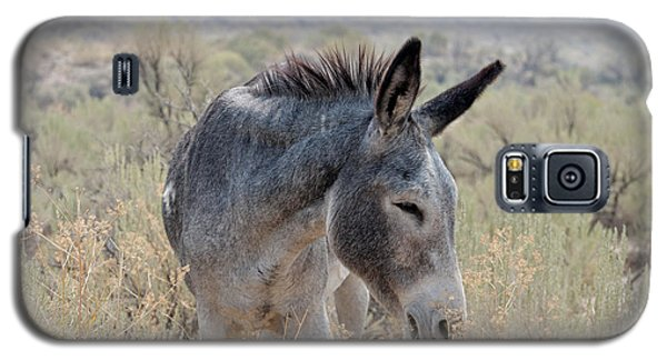 Burro In The Mountains Galaxy S5 Case