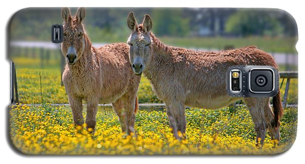 Burros In The Buttercups Galaxy S5 Case by Suzanne Stout