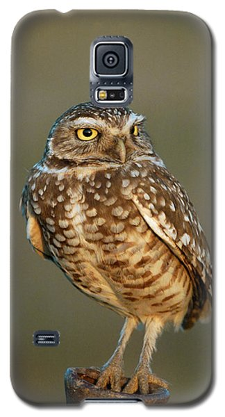 Burrowing Owl At Sunset Galaxy S5 Case