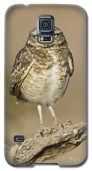 Galaxy S5 Case featuring the photograph Burrowing Owl by Bryan Keil
