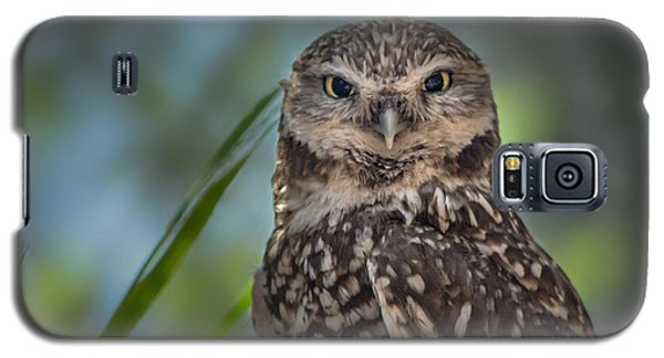 Burrowing Owl Galaxy S5 Case by Linda Villers