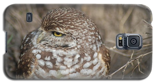 Galaxy S5 Case featuring the photograph Burrowing Owl by Oksana Semenchenko
