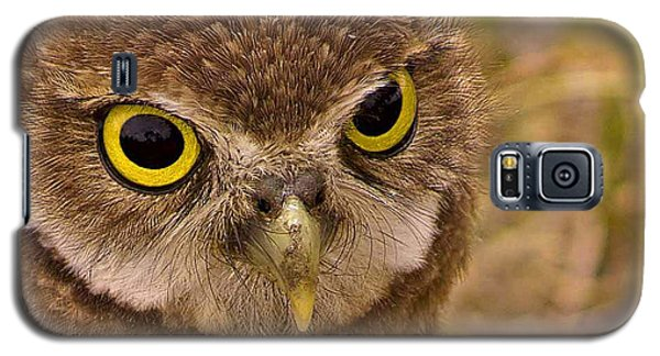Galaxy S5 Case featuring the photograph Burrowing Owl Portrait by Anne Rodkin
