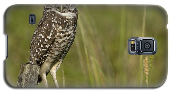 Burrowing Owl Stare Galaxy S5 Case