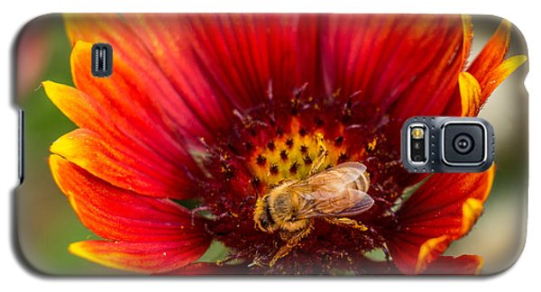 Burst Of Color Galaxy S5 Case by Kathleen Scanlan