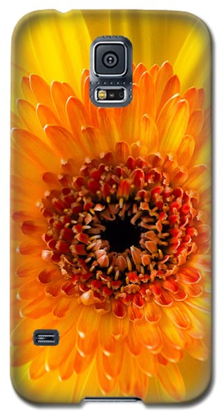 Burst Of Sunshine Galaxy S5 Case by Shelby  Young