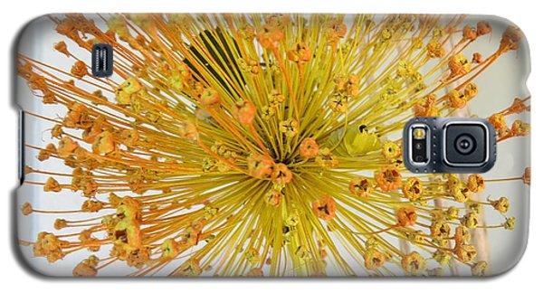 Burst Of Yellow Galaxy S5 Case by Jeanette Oberholtzer