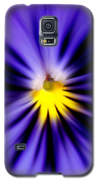 Bursting With Blue Pansy Galaxy S5 Case by Kelly Nowak