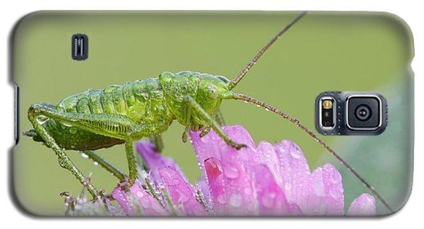 Cricket Galaxy S5 Case - Bush Cricket by Heath Mcdonald