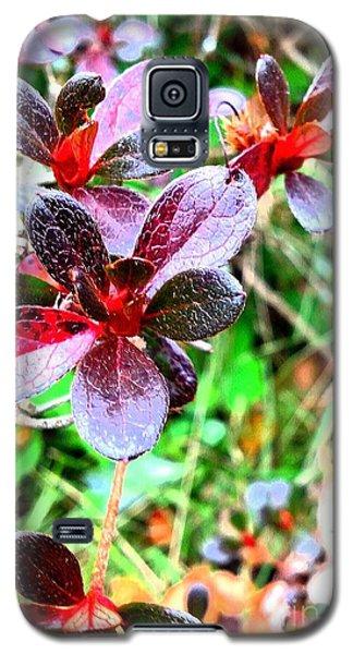 Winter Bushes Galaxy S5 Case