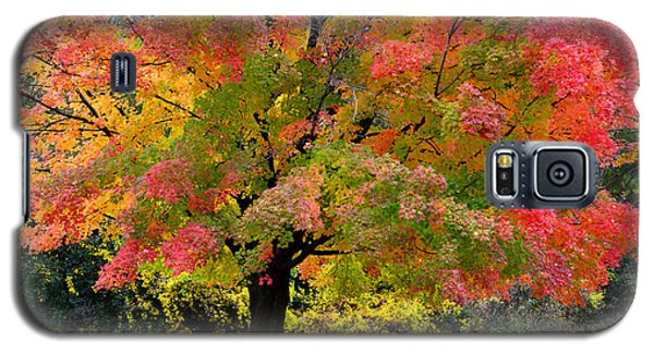 Busse Woods Fall Color Galaxy S5 Case
