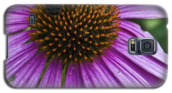 Busy Bee Galaxy S5 Case by Deborah Klubertanz