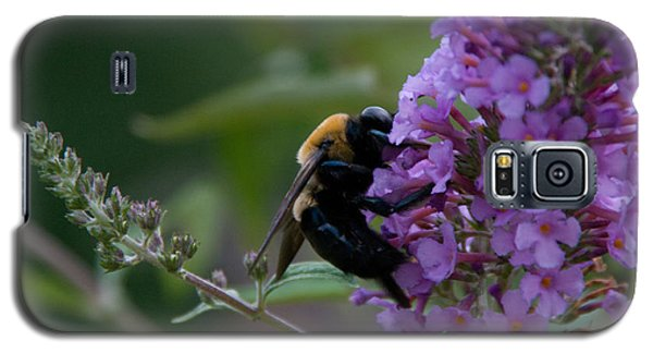 Galaxy S5 Case featuring the photograph Busy Bee by Greg Graham