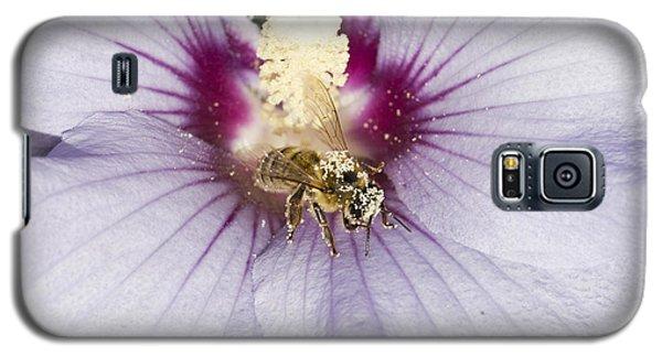 Busy Bee Galaxy S5 Case
