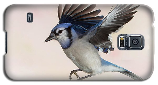 Galaxy S5 Case featuring the photograph Busy Billy Blue Jay by Gerry Sibell