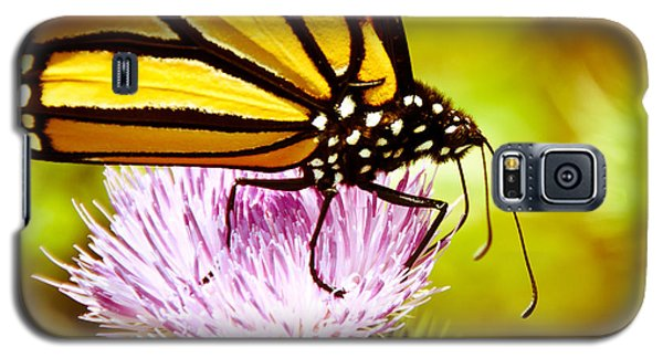 Busy Butterfly Galaxy S5 Case by Cheryl Baxter