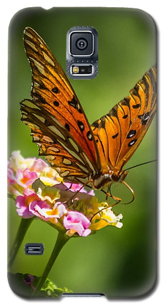 Busy Butterfly Galaxy S5 Case by Jane Luxton