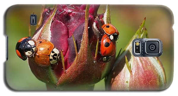 Busy Ladybugs Galaxy S5 Case by Rona Black