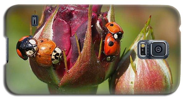 Busy Ladybugs Galaxy S5 Case