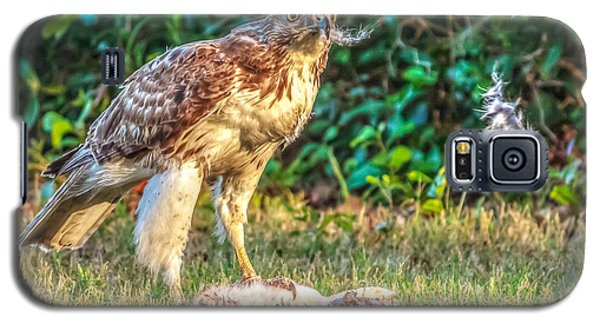 Buteo Jamaicensis Galaxy S5 Case by Rob Sellers