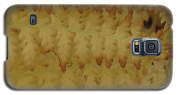 Butter Ferns Galaxy S5 Case