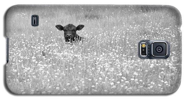 Buttercup In Black-and-white Galaxy S5 Case by JD Grimes