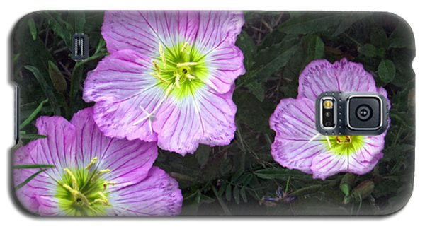 Buttercup Wildflowers - Pink Evening Primrose Galaxy S5 Case