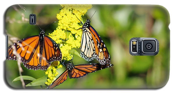 Galaxy S5 Case featuring the photograph Butterflies Abound by Greg Graham
