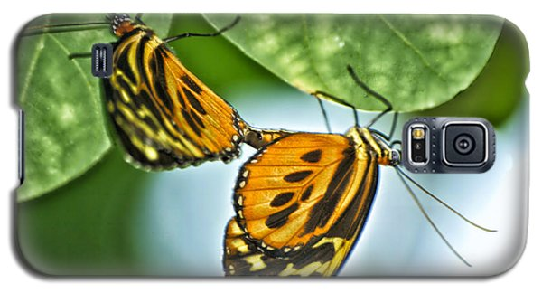 Galaxy S5 Case featuring the photograph Butterflies Mating by Thomas Woolworth
