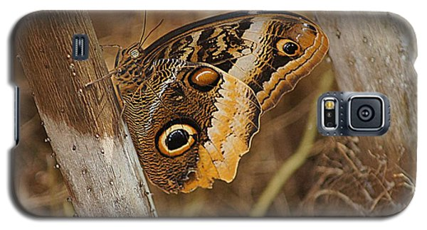 Galaxy S5 Case featuring the photograph Butterfly 1 by Kathy Churchman