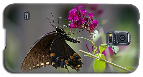Galaxy S5 Case featuring the photograph Butterfly 1 by Tannis  Baldwin