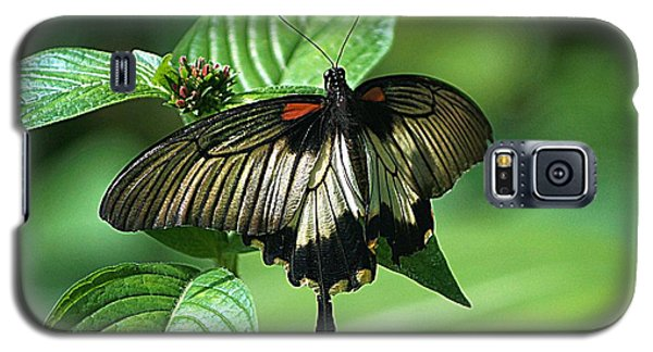 Galaxy S5 Case featuring the photograph Butterfly 2 by Kathy Churchman