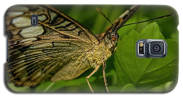 Galaxy S5 Case featuring the photograph Butterfly 2 by Olga Hamilton
