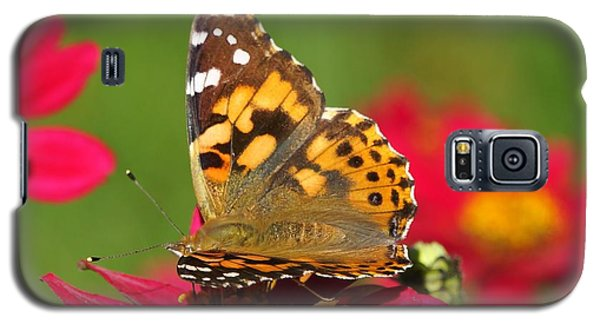 Galaxy S5 Case featuring the photograph Butterfly 2 by Steven Clipperton