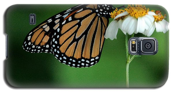 Galaxy S5 Case featuring the photograph Butterfly 3 by Leticia Latocki