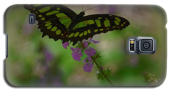 Galaxy S5 Case featuring the photograph Butterfly 4 by Leticia Latocki