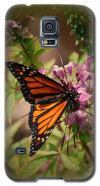 Galaxy S5 Case featuring the photograph Butterfly 5 by Leticia Latocki