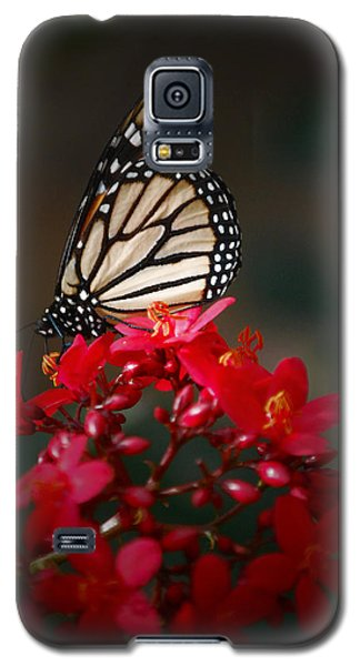Galaxy S5 Case featuring the photograph Butterfly 6 by Leticia Latocki